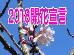 2018開花宣言