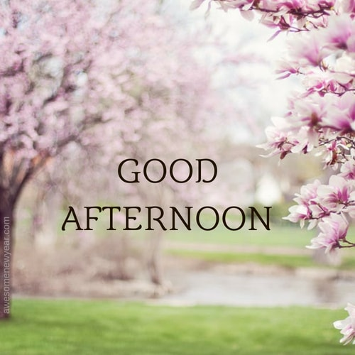 Good Afternoon Images Photos And Pictures Download Beauteous Gud Afternoon Image Download