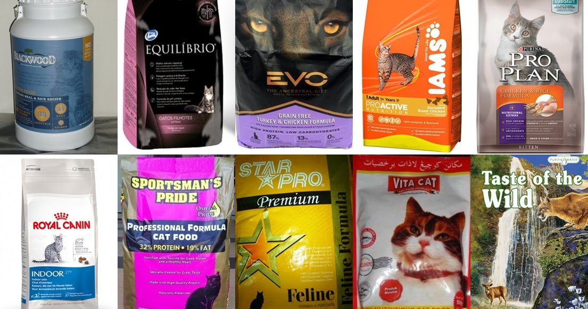 10 Rekomendasi Makanan Kucing Terbaik (Terbaru Tahun 2019)