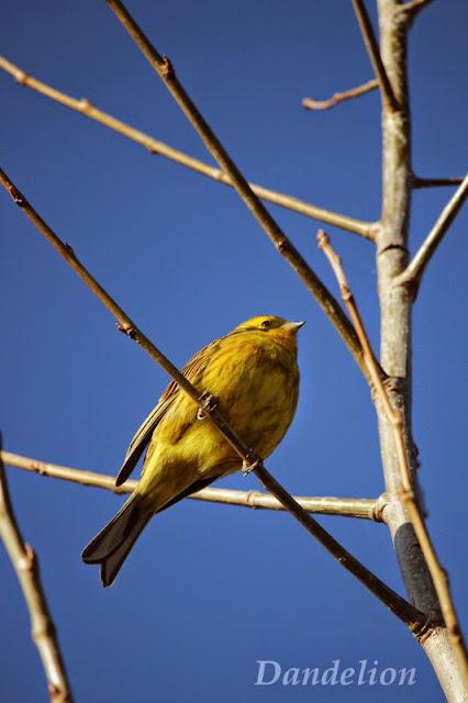 http://dandelion01.blogspot.de/2015/03/birds.html