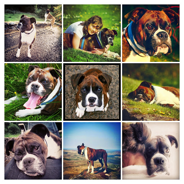 images of a boxer