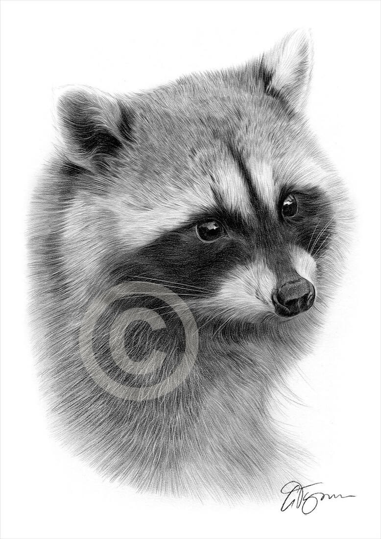 10-Raccoon-Gary-Tymon-Wildlife-and-Domestic-Animal-Pencil-Drawings-www-designstack-co