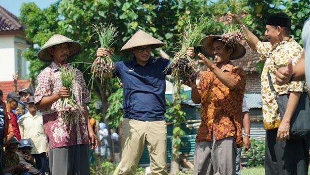 Petani Bawang Curhat Selalu Rugi saat Panen, Sandi Janjikan Perubahan