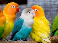 Kumpulan Daftar Harga Harga Burung Kicau Terbaru 2019 Lengkap