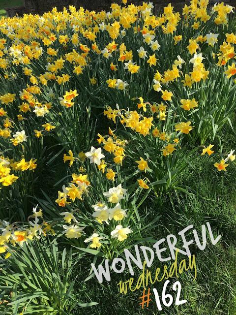 Wonderful Wednesday #162