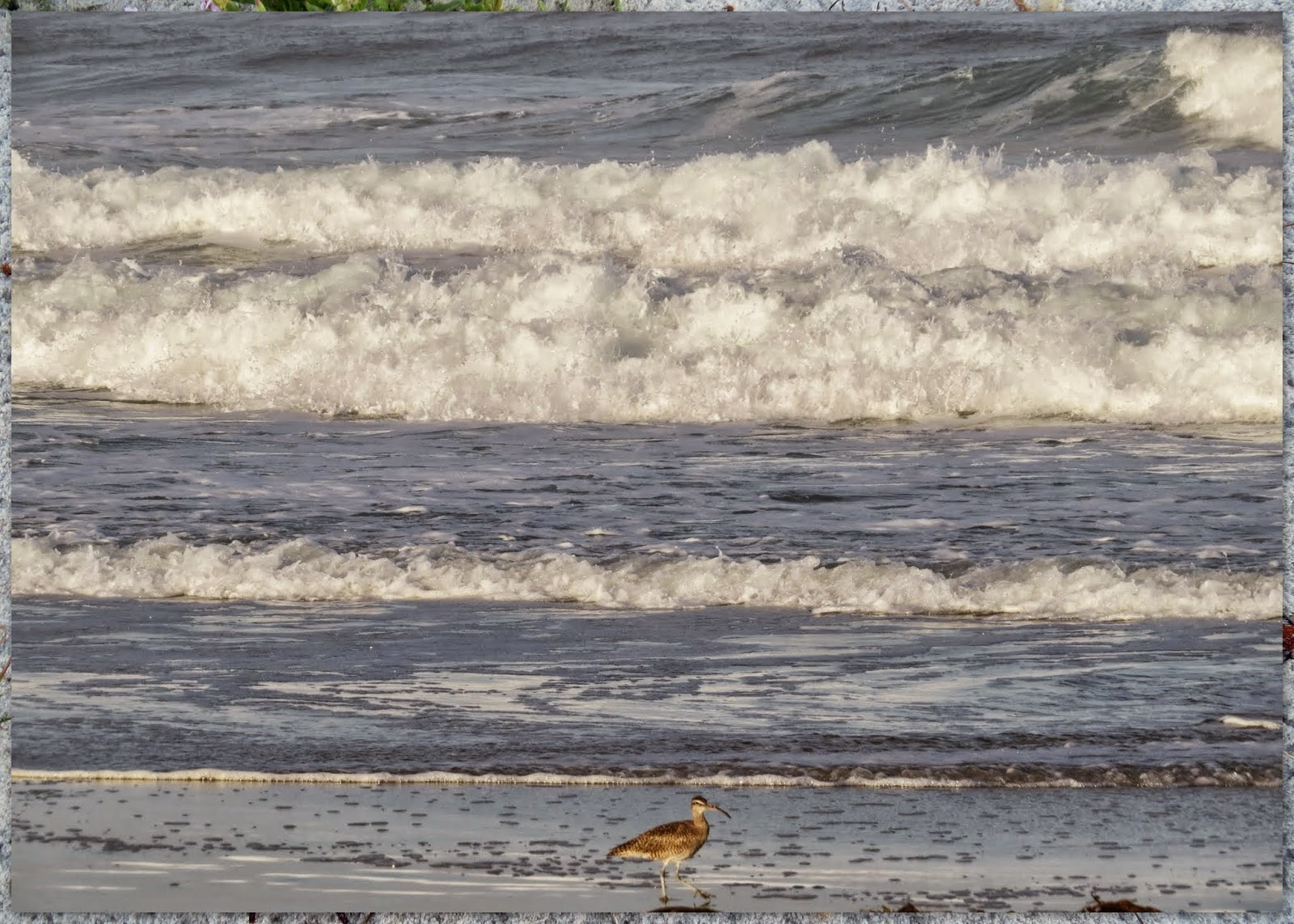 Birds and Crashing Surf