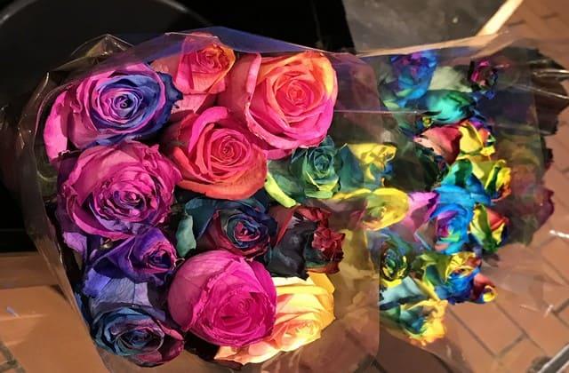 Karakter humoris juga terwakili oleh mawar pelangi yang unik