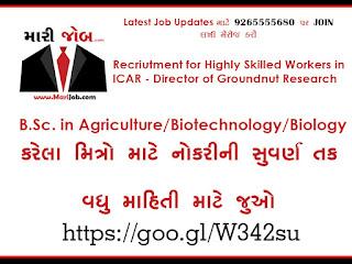 Groundnut Research Recruitment