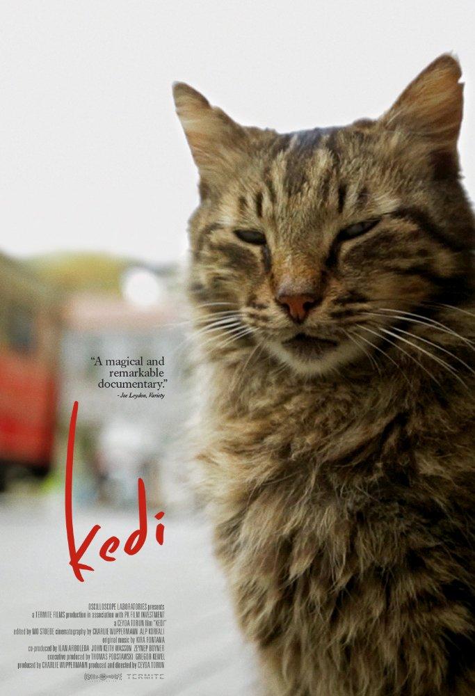 Cinematic Releases: Kedi (2016) - Reviewed