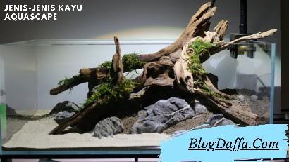 Jenis Kayu untuk Aquascape