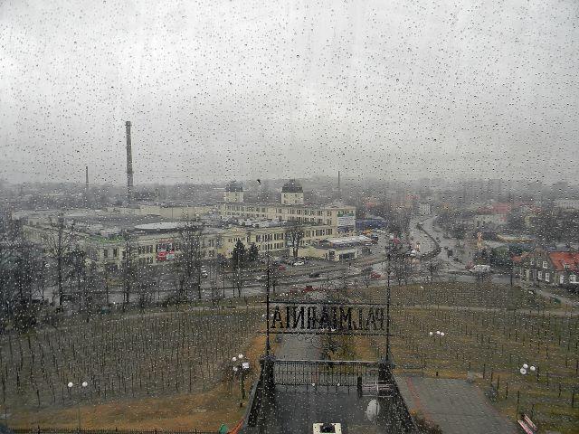 Focus Mall, palmiarnia, deszcz, za oknem