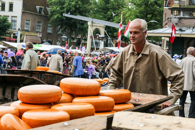 Käsekarre voller Gouda in Alkmaar
