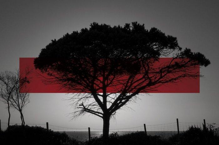Contemporáneos. Treinta Fotógrafos de Hoy (La Fabrica) | Nueva Fotografía Internacional en el Siglo XXI   - Nuevos Valores de la Fotografía Contemporánea