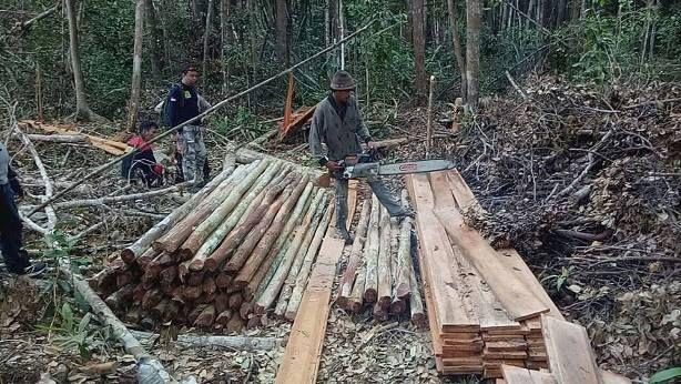Global Forest Watch Ungkap Pembalakan Hutan Meningkat di 2019