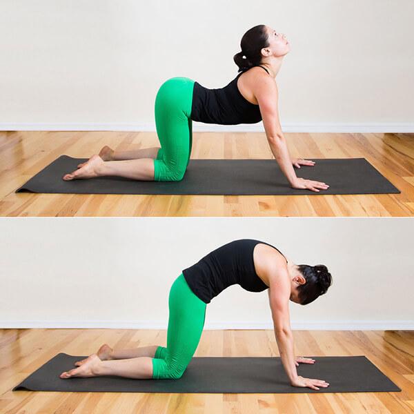 Bài tập yoga chữa đau lưng tại nhà cho dân văn phòng