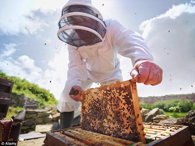 Τσιμπήματα μελισσών: Αποτελεσματικοί τρόποι αποφυγής τους