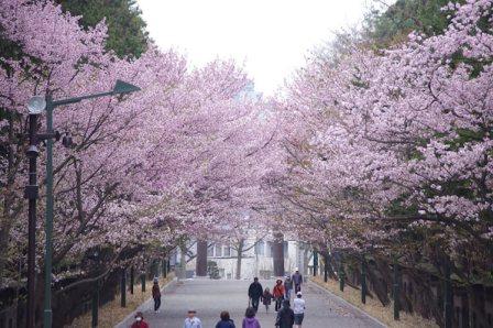 Maruyama Park, Sapporo