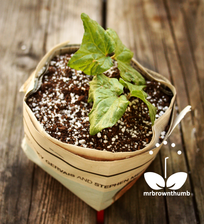 Square newspaper seed starting pots