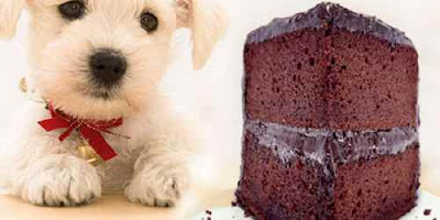 dogs and chocolate: Can Dogs Eat Chocolate?