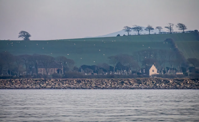 Photo of trees on a hilltop from the Solway Firth