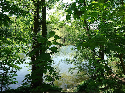 Blick auf die Krumme Lanke vom Uferweg. Der See selbst ist sonnenbeschienen, Bäume und Weg liegen im Schatten.