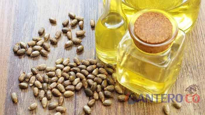 Manfaat dan Efek Samping Minyak Jarak