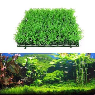https://www.say.web.id/2018/12/cara-menanam-dan-merawat-hairgrass-pada.html