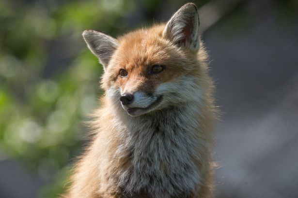 PROD-Calls-To-Repeal-Controversial-Hunting-Ban-Raises-Animal-Welfare-Concerns