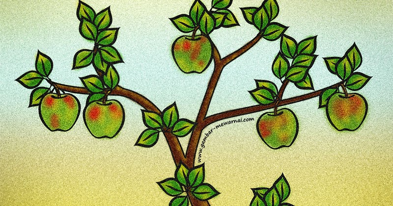 mewarnai gambar pohon apel