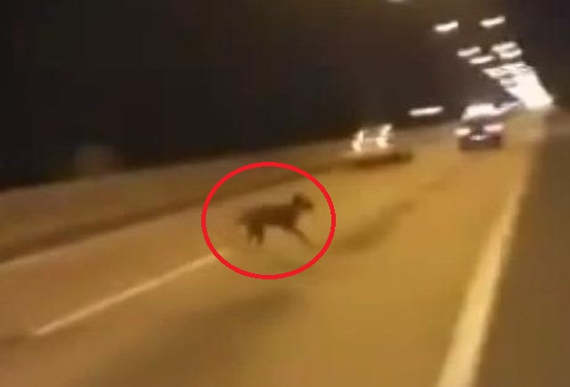 Dog Caught Performing Teleportation To Evade Collision With Racers