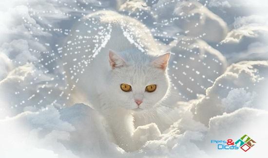 Carta de Despedida de um gato ao seu dono