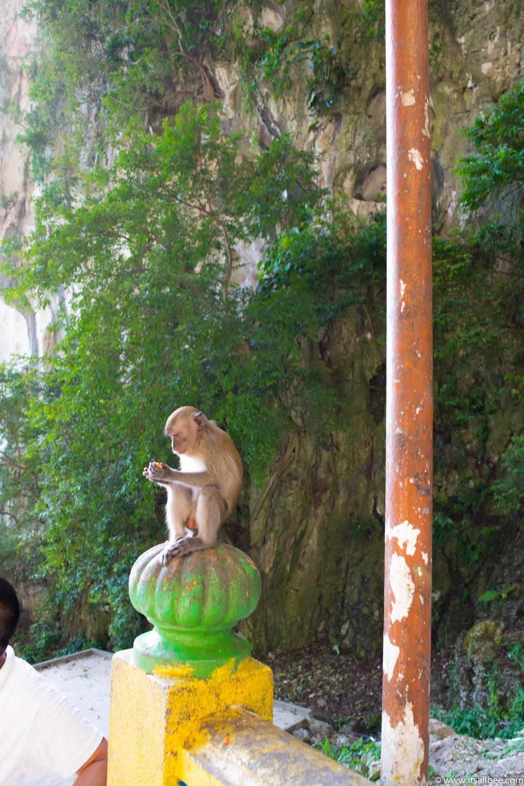 batu caves monkeys on the steps