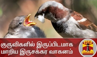 Sparrows | Thanthi Tv