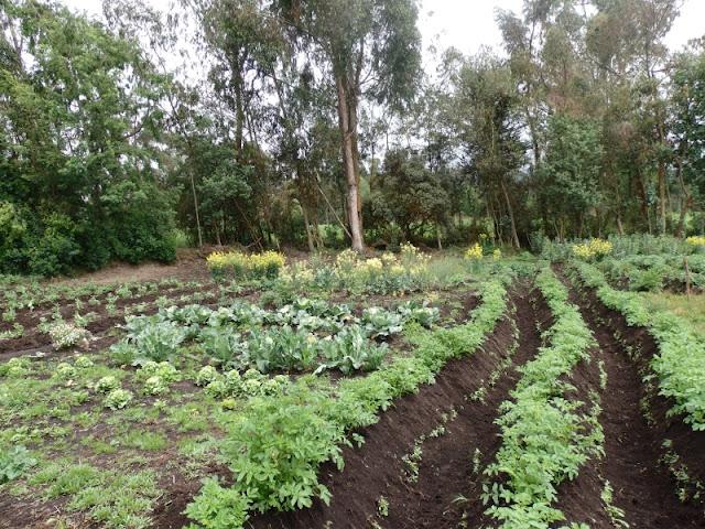 http://www.cuexcomate.com/2016/05/como-se-conservan-las-semillas-en.html