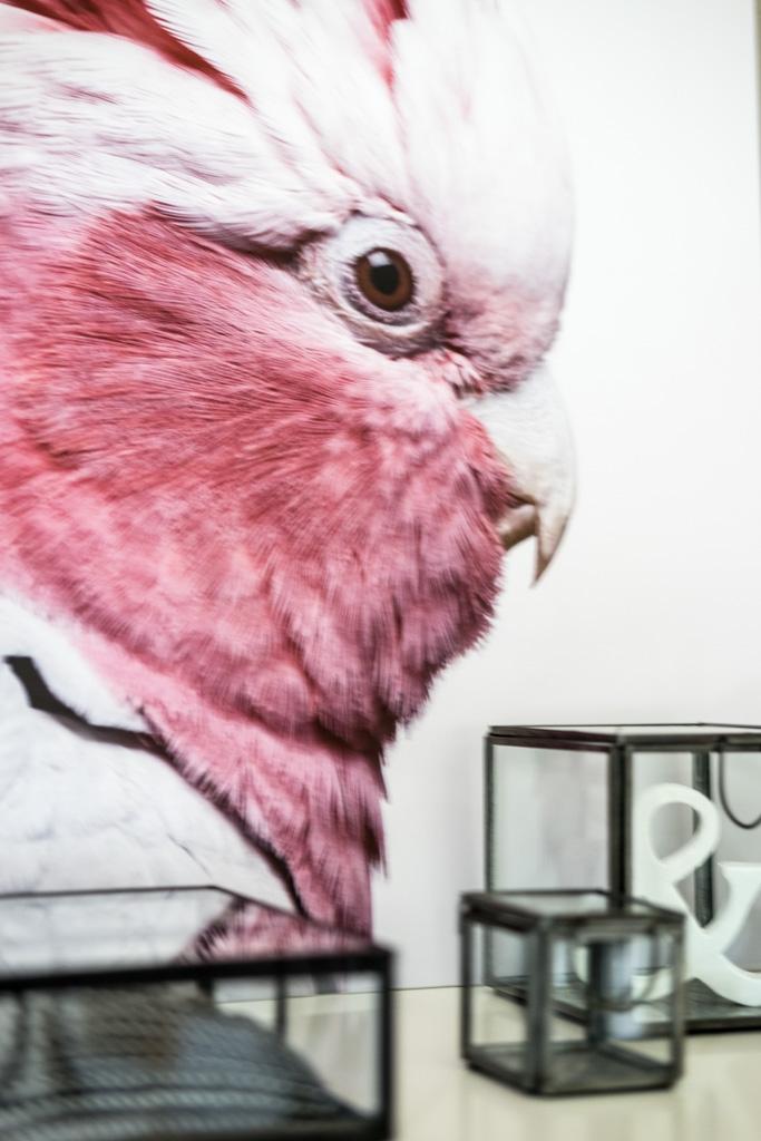 fim.works | Lifestyle Blog | Kakadu-Print, Glasboxen mit Deko