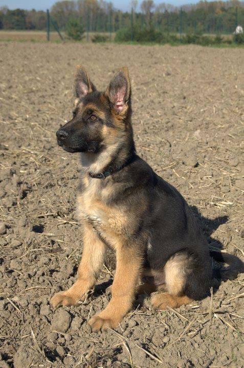 adiestramiento canino escuela texcoco educación
