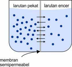 Dalam pelajaran Kimia terdapat bahan seputar pengertian tekanan osmosis Tekanan Osmosis (Pengertian, Rumus, Proses Terjadi, dan Contohnya)