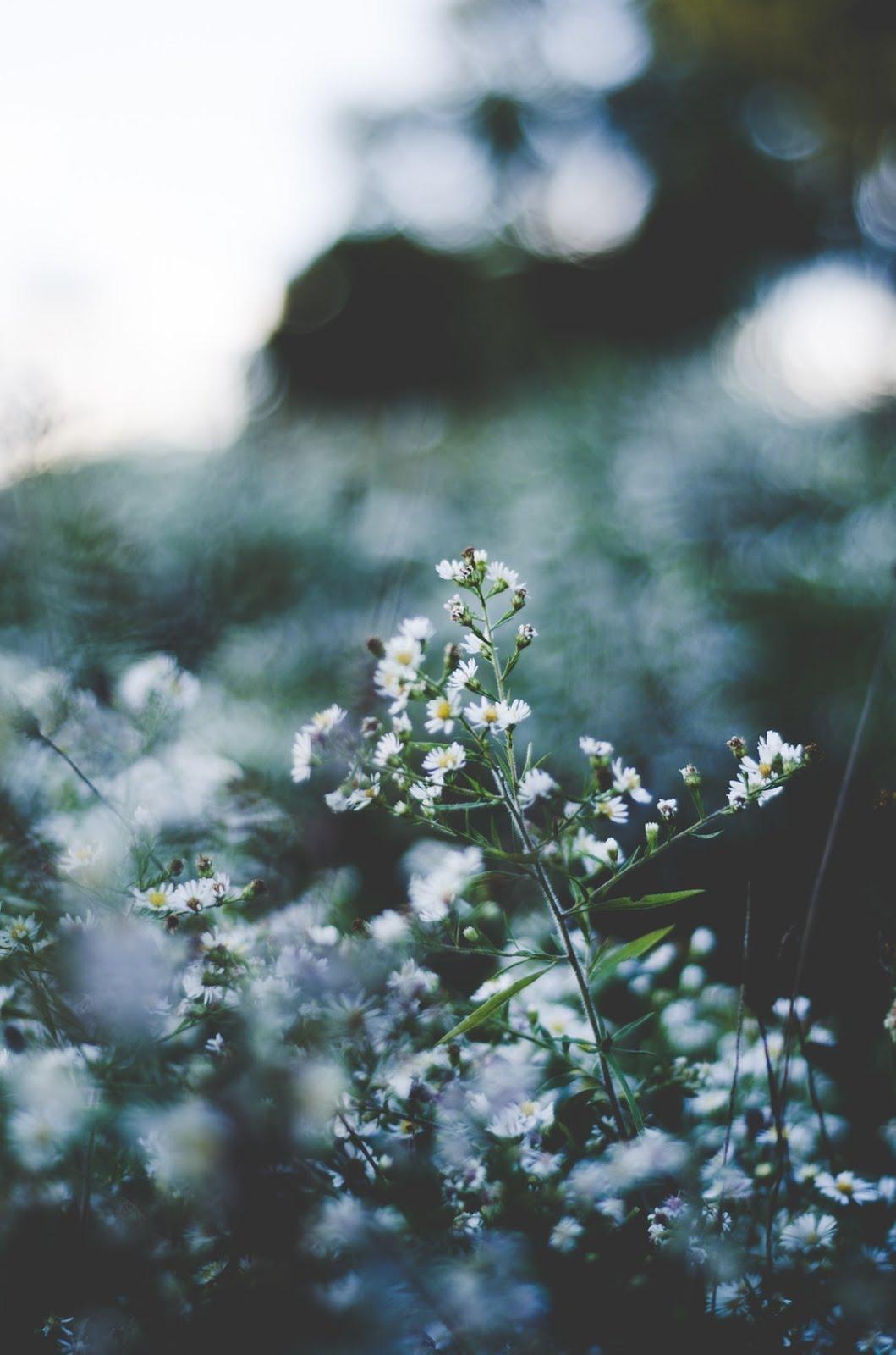 ازهار الربيع الزرقاء الساحرة خلفيات ايفون 6s عالية الجودة