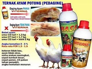 Tips ramuan herbal penambah berat badan ayam broiler