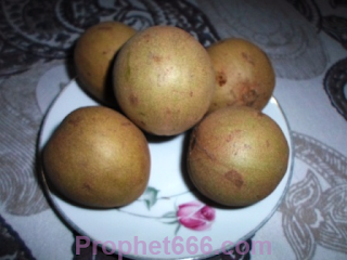 The Chiku or Sapodilla Fruit