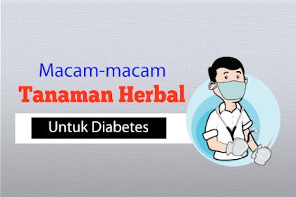 Macam-Macam Tanaman Herbal Untuk Diabetes