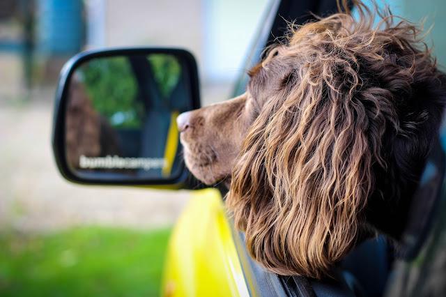 dog friendly camper van rental