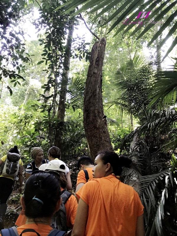 visit perak 2017 sg papan trekking trail