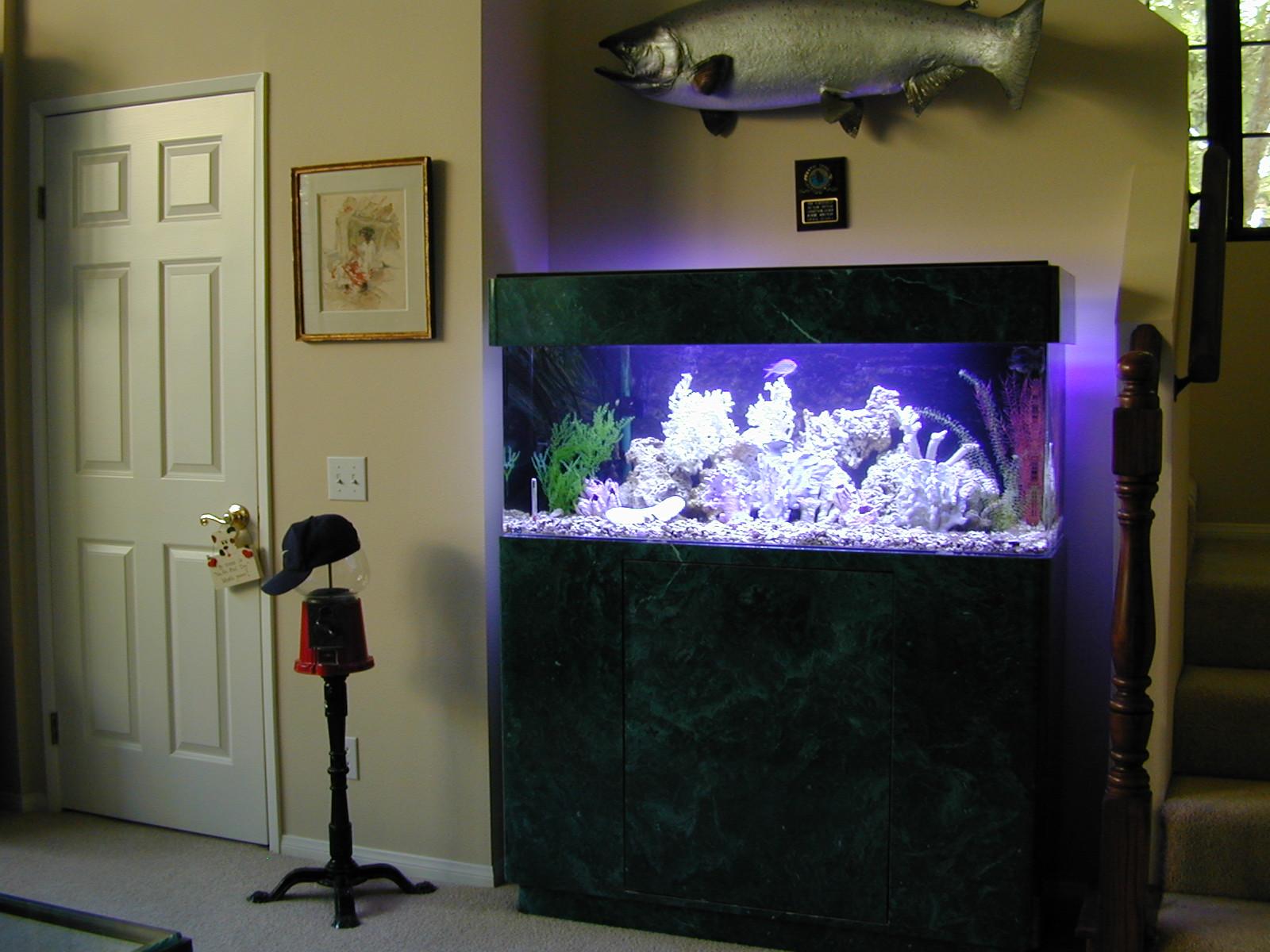 Cool fish tank ideas