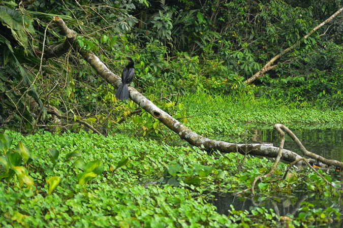 Wildlife in Tortuguero, Costa Rica