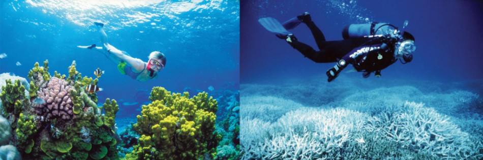 You Still Think Climate Change Is A Hoax These 20 Before-And-After Photos Will Leave You Speechless! - BLEACHING OF THE GREAT BARRIEF REEF, 2002 AND 2014
