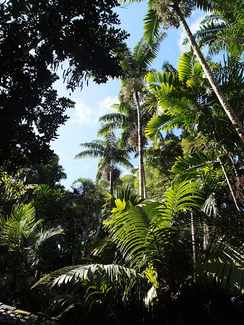Creating paradise: A poet's palm forest