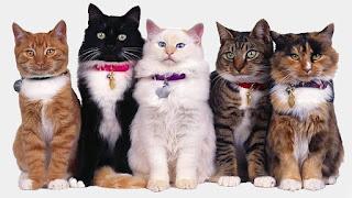 Otto gatti più diffusi del mondo