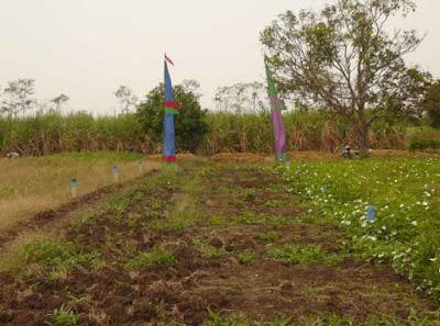 Tips Membeli Tanah Kavling Secara Kredit
