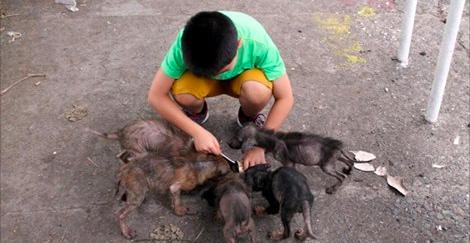 """Ce jeune trouve 6 gros """"rats"""" derrière une église. 1 an plus tard, ils sont métamorphosés!"""